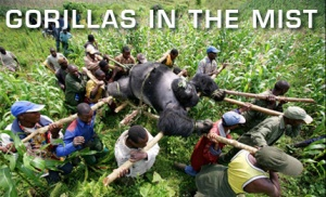 The Best Travel and Adventure Movies -- Gorillas in the Mist