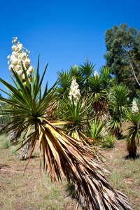 "alt=""The Botanical Garden at Lokrum Island"""