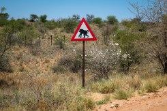 Baboon crossing, Namibia