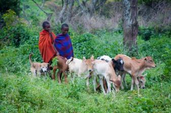 Massai brothers herding goats