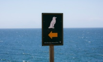 Penguin crossing! Southwest Africa.