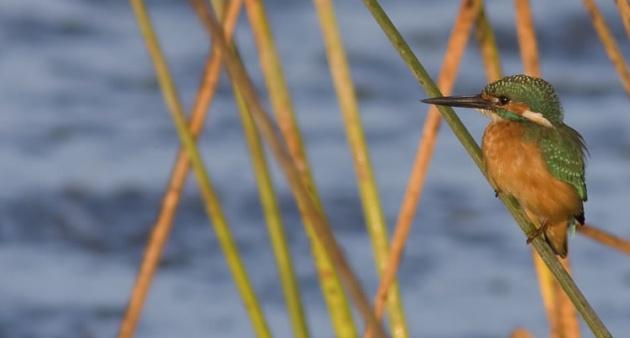 Sani Wetland Wetland Preserve.