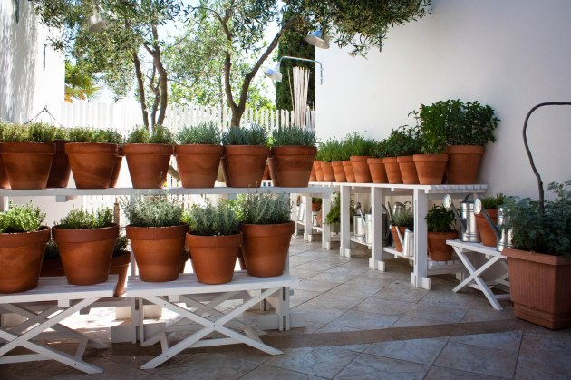 Fresh herbs grow outside of Tomata Restaurant at Sani Resort in Halkidiki, Greece.