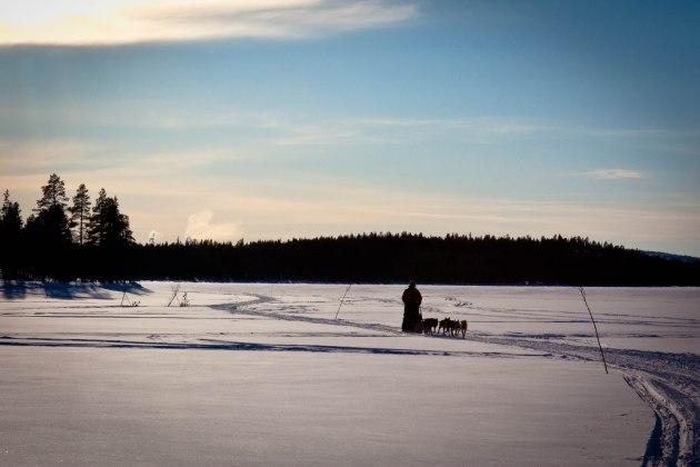 Dogsledder in Lapland Wilderness, Northern Sweden