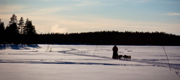 Dogsledding Lapland wilderness, northern Sweden. @WorldOnAFork