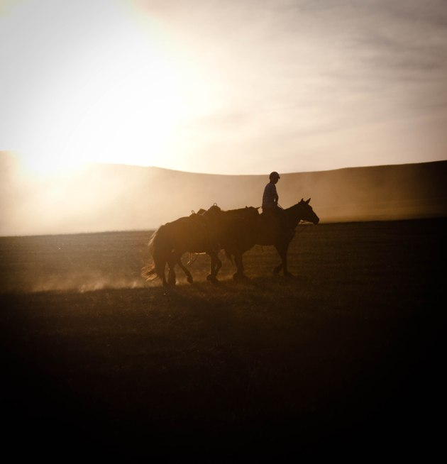 Mongolia, horse country