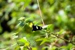 Butterflies at the Inkaterra butterfly farm in Puerto Maldanado