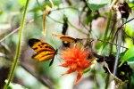 Butterflies in the Amazon
