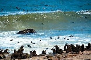 Cape Fur Seals on the Skeleton Coast