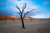Dead trees at Deadvlei -- one of the best places on Earth for photographers