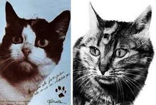 Catstronauts -- Felix and Félicette, c. 1963