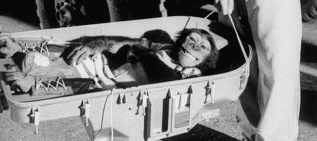 Ham, the space fairing chimpanzee c. 1961