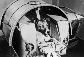 Laika - the first dog in space c. 1957