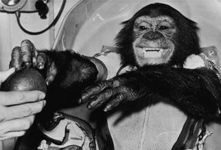 Ham -- the first chimpanzee in space, c. 1961