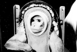 Sam, the first primate in space, c. 1959