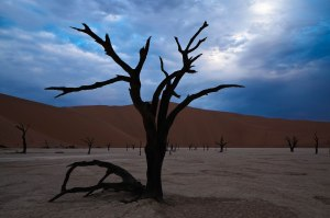 The night falls upon Dead Vlei in the world's oldest desert. #Namibia