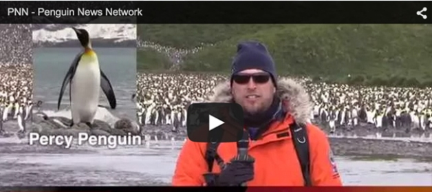 Live from the Colony -- #PNN Penguin News Network