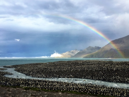A perfect rainbow over the largest King penguin colony in the world, Saint Andrews Bay, South Georgia