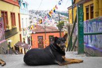 I don't know who's dog this is... Valparaíso's, I think