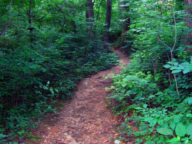 Glover-Archbold Park urban forest and running trail. (Credit: National Park Service)