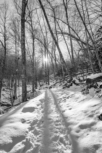 A trail in Shenandoah National Park in black and white. Photo credit: Jonathan Irish